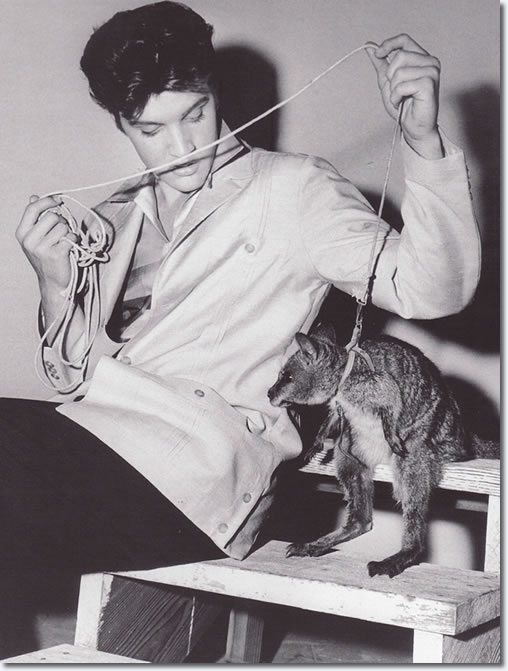 elvis_with_wallaby_jailhouse_rock_set